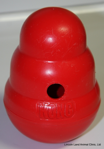 Kong wobblers decrease stress in the kennels at Lincoln Land Animal Clinic, LTD, Jacksonville, IL 62650. 217-245-9508